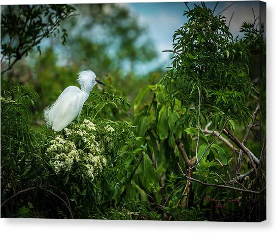 Egrets Canvas Print - Snowy by Marvin Spates