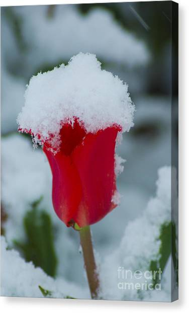 Snowy Red Riding Hood Canvas Print