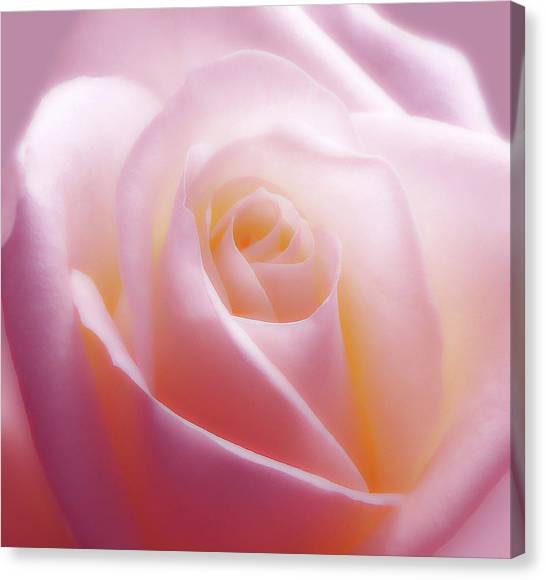 Soft Nostalgic Rose Canvas Print