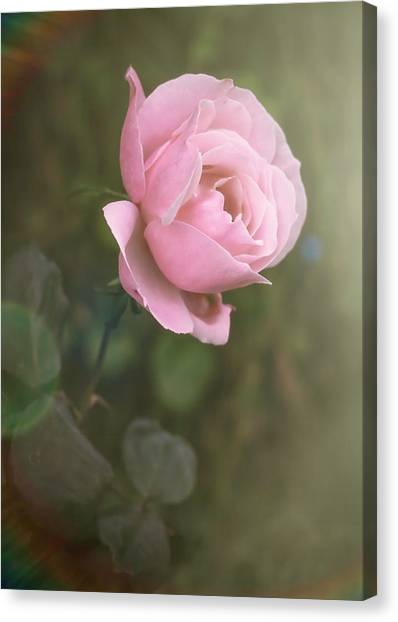 Canvas Print featuring the photograph Softness by Elaine Malott