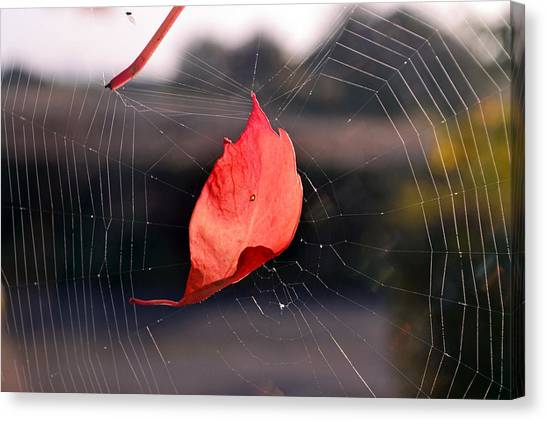 Spider Web Canvas Print - Spider Web by Maye Loeser