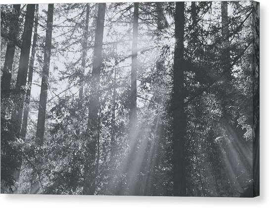 Redwood Forest Canvas Print - Splendor by Laurie Search