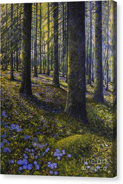 Mossy Forest Canvas Print - Spring Forest by Veikko Suikkanen