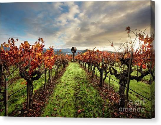 Sonoma Valley Canvas Print - Standing Tall by Jon Neidert