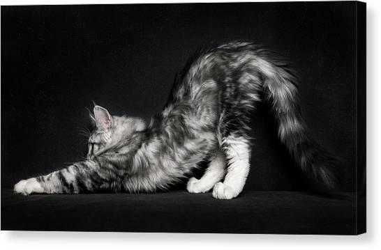 Stretching Canvas Print