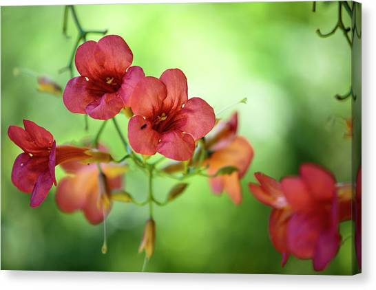 Botanic Canvas Print - Summer Flowers by Nailia Schwarz