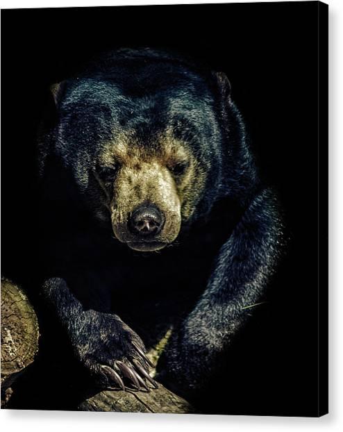 Deforestation Canvas Print - Sun Bear by Martin Newman