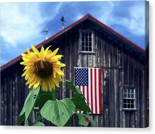 Sunflower By Barn Canvas Print
