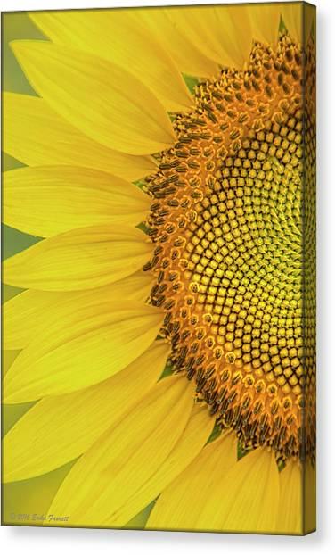 Sunflower Petals Canvas Print