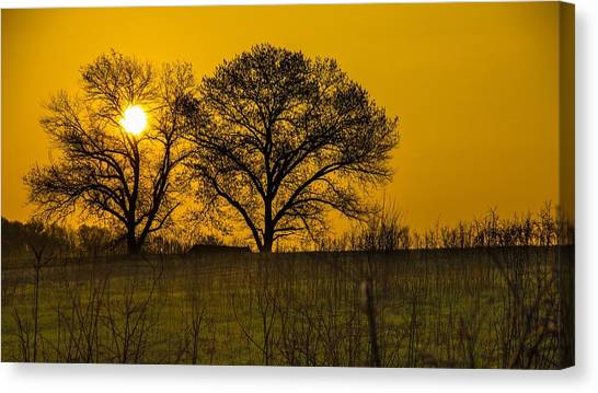 Fruit Trees Canvas Print - Sunrise by Maye Loeser