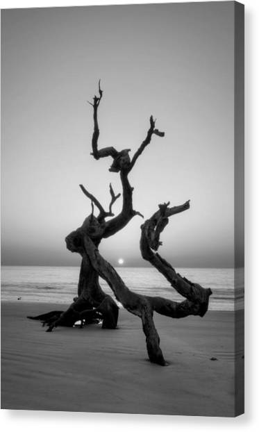 Sunrise On Driftwood In Black And White Canvas Print