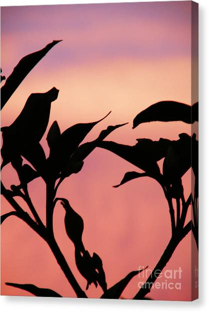 Sunset Silhouette Canvas Print by Rose  Hill