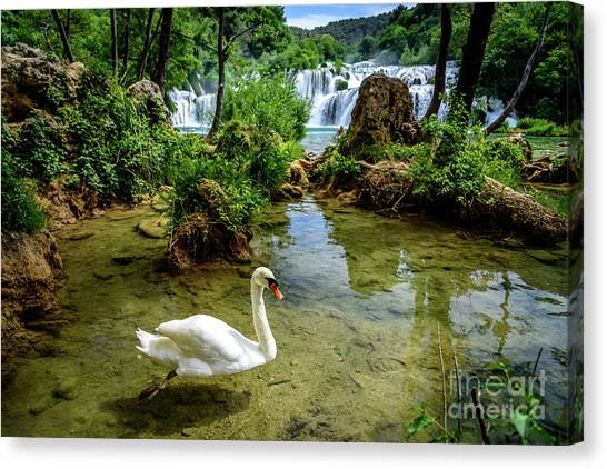 Swan In The Waterfalls Of Skradinski Buk At Krka National Park In Croatia Canvas Print