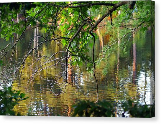 Swan Lake Canvas Print by Don Prioleau