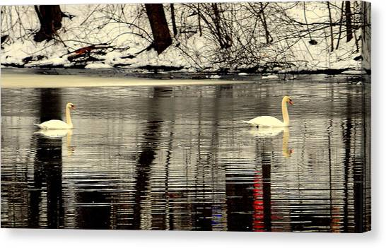 Swan Song Canvas Print by Aron Chervin