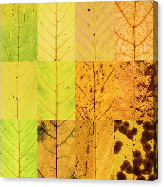 Swatches - Autumn Leaves Inspired By Gerhard Richter Canvas Print