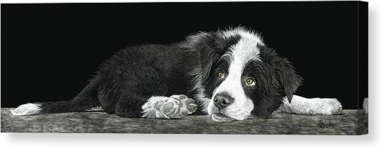 Tell Me More About Sheep Canvas Print