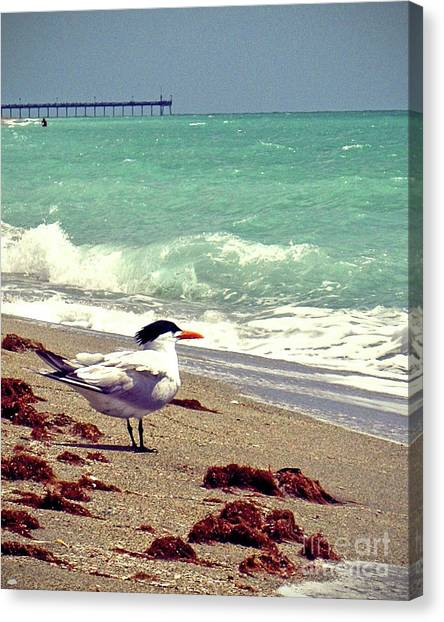 Island .oasis Canvas Print - Terns On The Beach by Chris Andruskiewicz