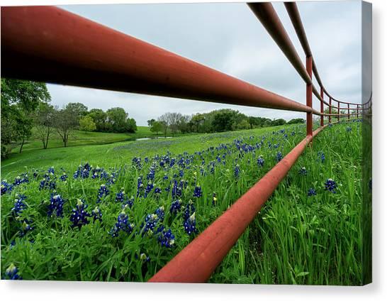 Texas Bluebonnets In Ennis Canvas Print