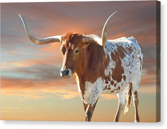Longhorn Canvas Print - Texas Icon by Robert Anschutz