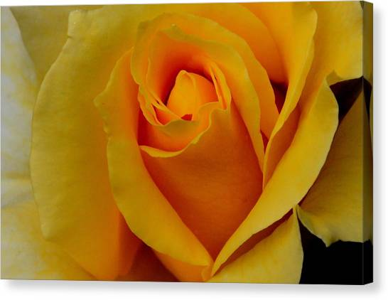Canvas Print - Texas Rose by Russell Wilson