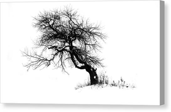 The Apple Tree Canvas Print