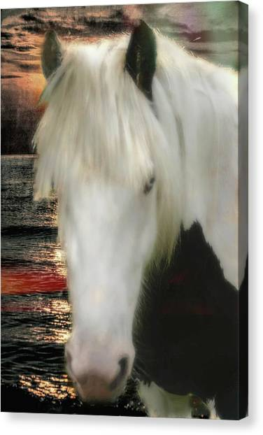The Beautiful Face Of A Gypsy Vanner Horse Canvas Print