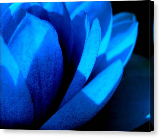 The Blue Lilly Canvas Print by Catherine Natalia  Roche