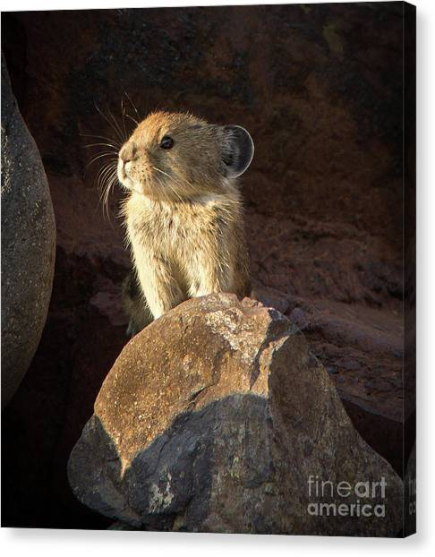 The Coast Is Clear Wildlife Photography By Kaylyn Franks Canvas Print