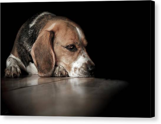 Beagles Canvas Print - The Day Dreamer by Paul Neville