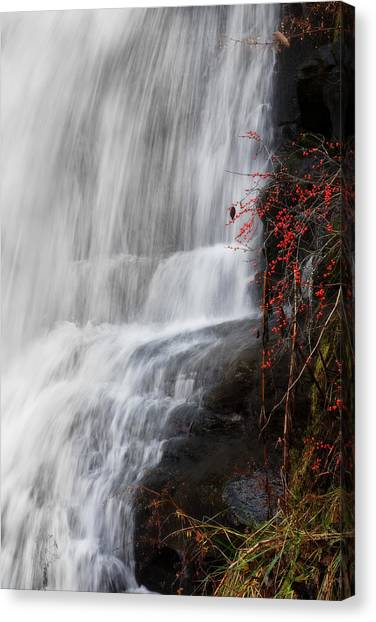 Mossy Forest Canvas Print - The Details by Lj Lambert