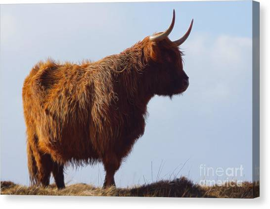 Glen Canvas Print - The Highland Cow by Smart Aviation