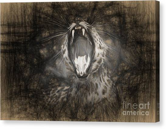 The Leopard's Tongue Rolling Roar IIi Canvas Print