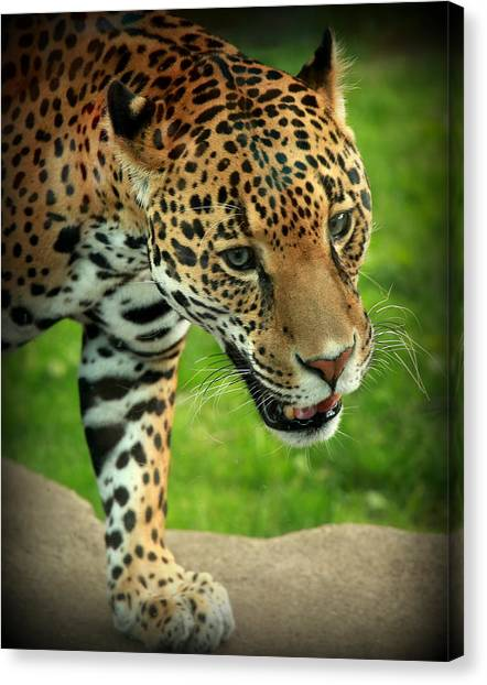 Leapords Canvas Print - The Look by Mark Salamon
