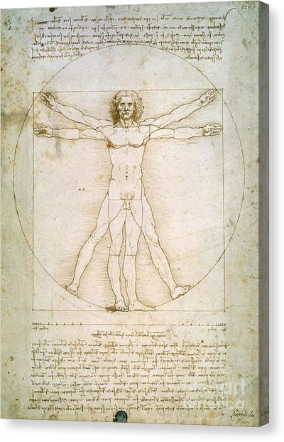 Nudes Canvas Print - The Proportions Of The Human Figure by Leonardo da Vinci