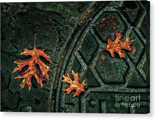The Three Leaves Canvas Print