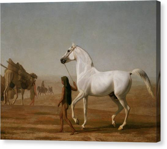 Arabian Desert Canvas Print - The Wellesley Grey Arabian Led Through The Desert by Jacques-Laurent Agasse