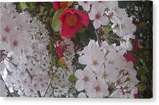 Thubaki Means Camellia Canvas Print