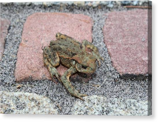 Vipers Canvas Print - Toad by Jackie Russo