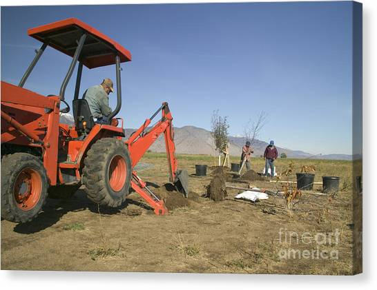Backhoes Canvas Print - Tractor Planting Trees by Inga Spence