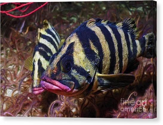 World Schooling Canvas Print - Tree Fish by Greg Amptman