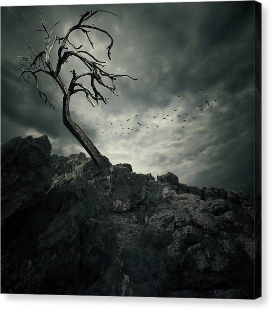 Storm Clouds Canvas Print - Tree by Zoltan Toth