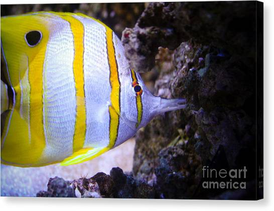 Tropical Fish Canvas Print by Brenton Woodruff