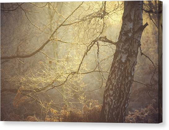 Sherwood Forest Canvas Print - Trunks by Chris Dale