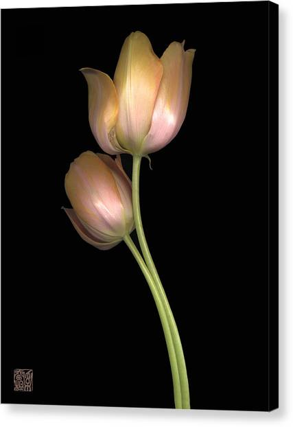 Tulip Canvas Print by Lloyd Liebes