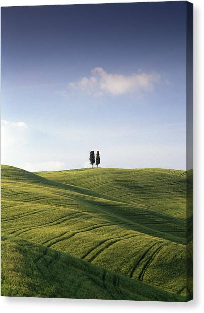 Twin Cypresses Canvas Print by Michael Hudson