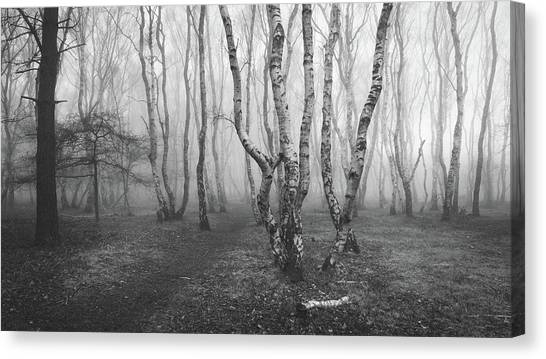 Sherwood Forest Canvas Print - Twisted by Chris Dale