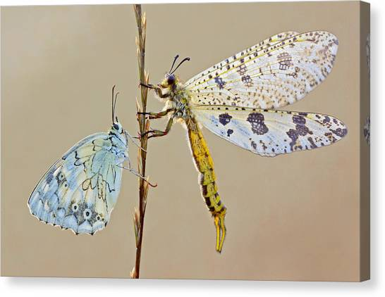 Bug Canvas Print - Untitled by S. Amer