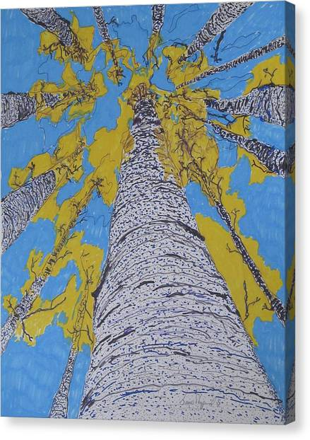 Up At Birch Canvas Print by James SheppardIII