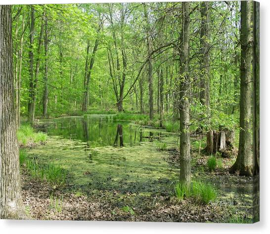 Vernal Pool Canvas Print